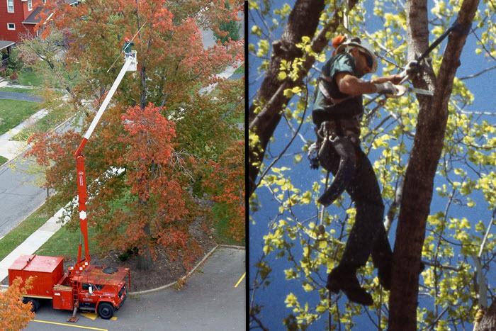 tree pruning expert